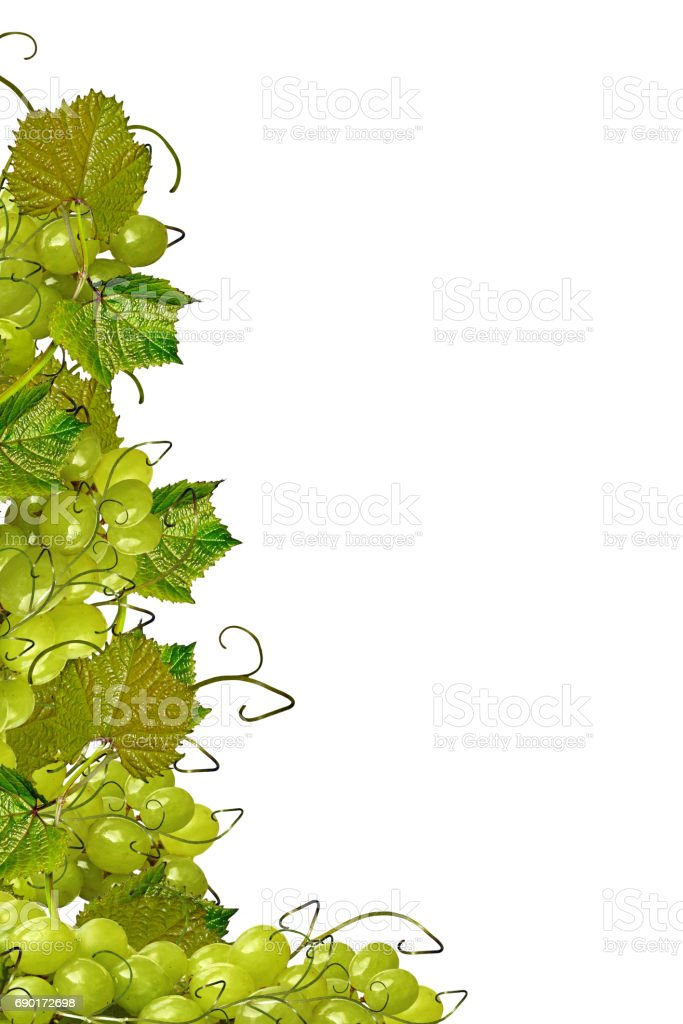 The branch of grapes stock photo