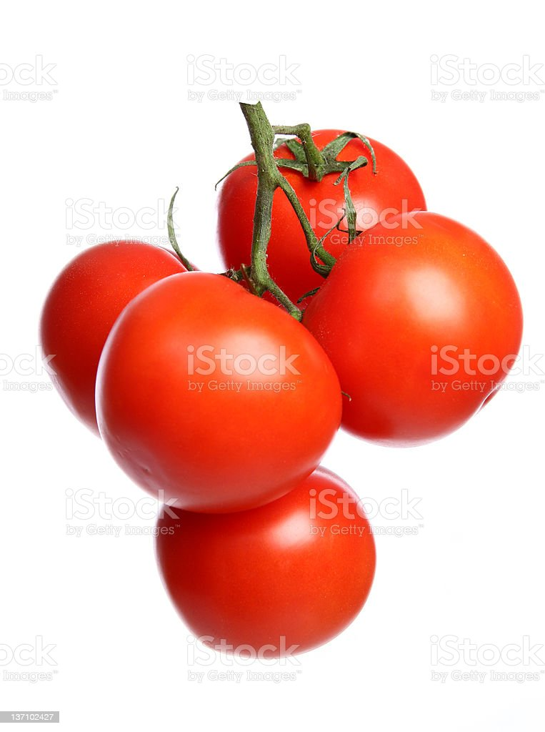The branch with red tomatoes stock photo