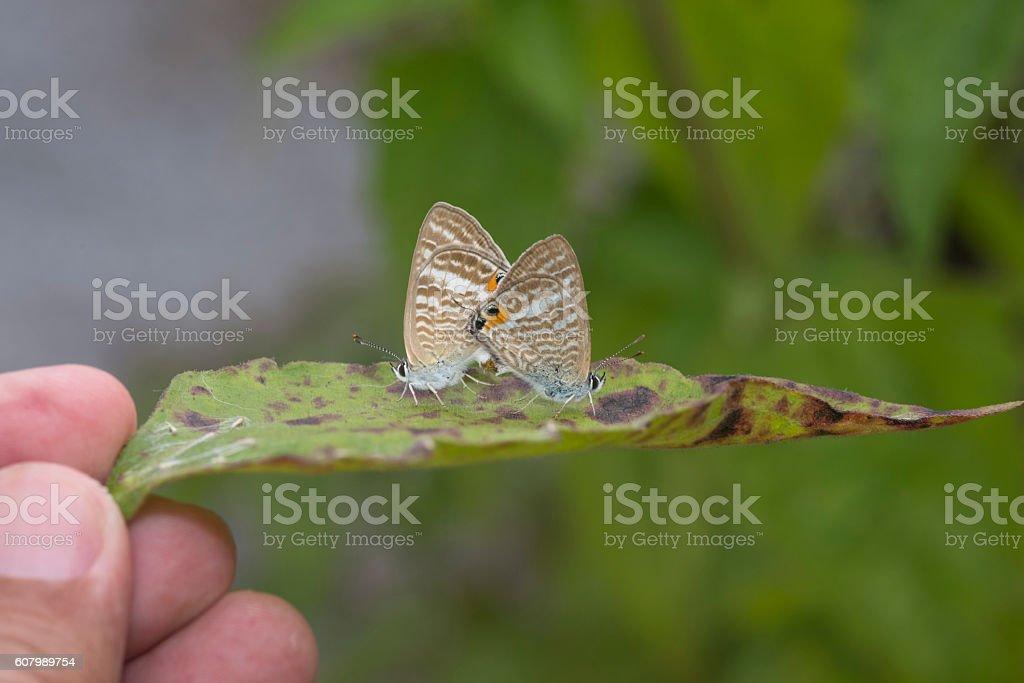 L'élevage de papillons photo libre de droits