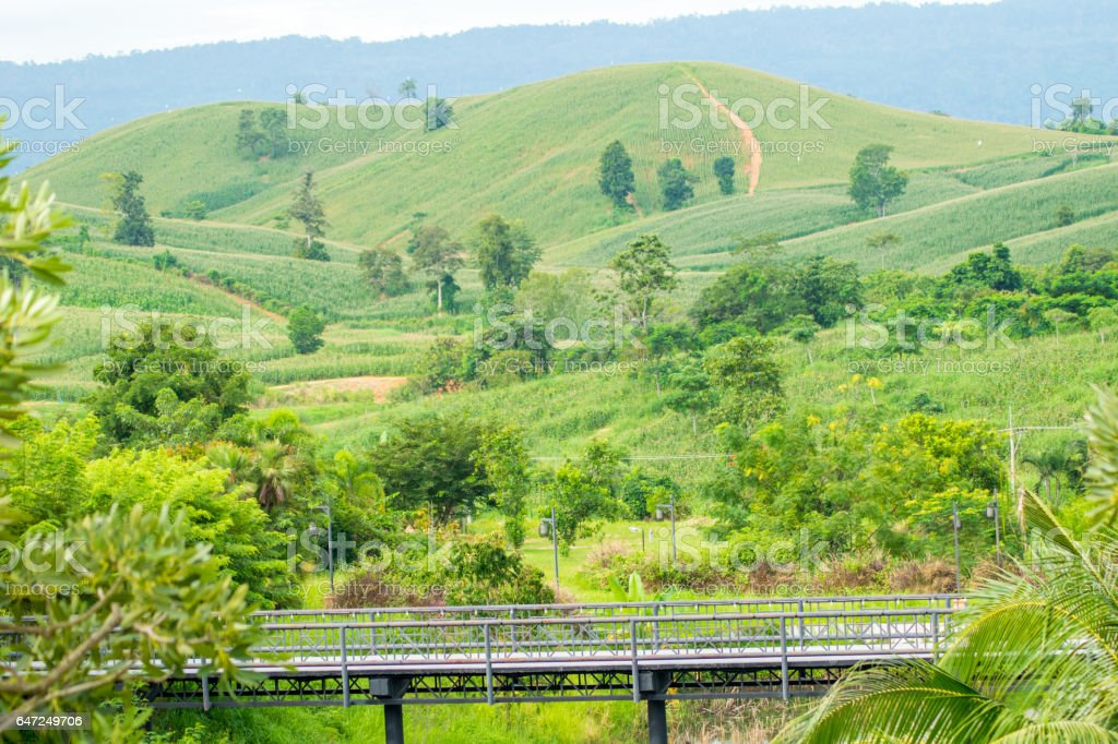 the bridge with green moutain background stock photo