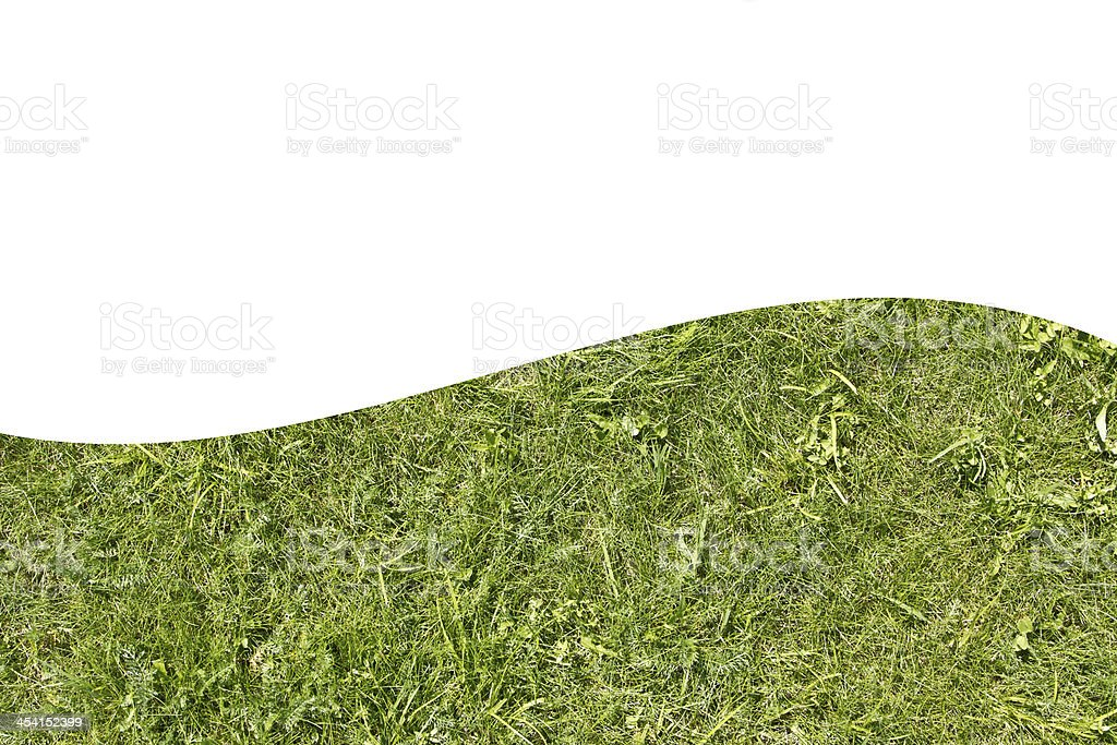 the bright green grass royalty-free stock photo