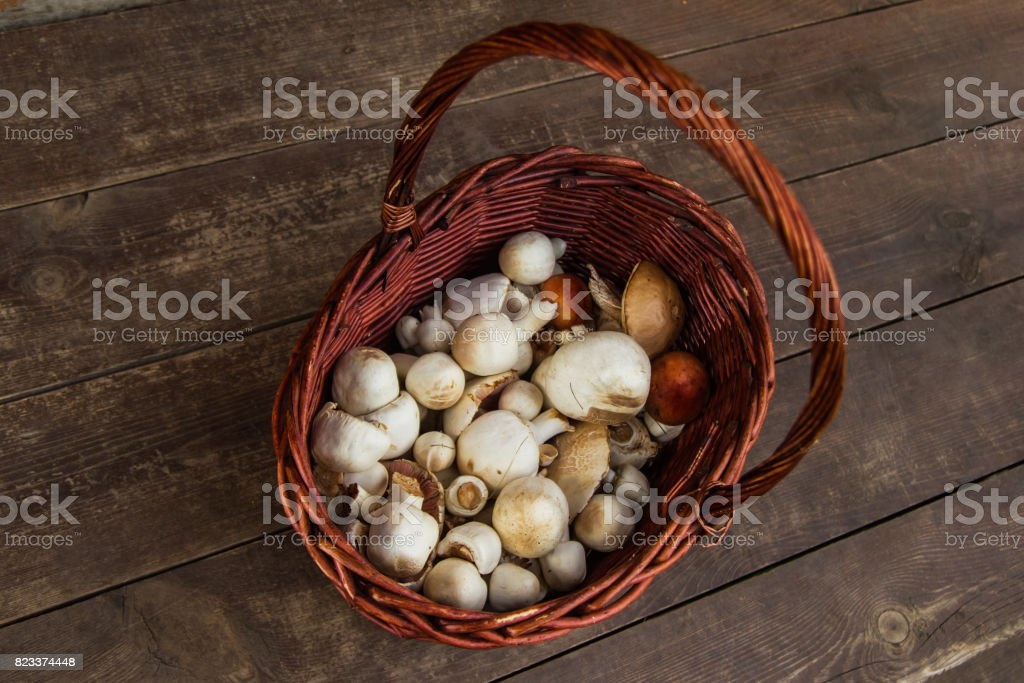 The brown basket with champignons on a wooden background, top view. Russia, Siberia. stock photo