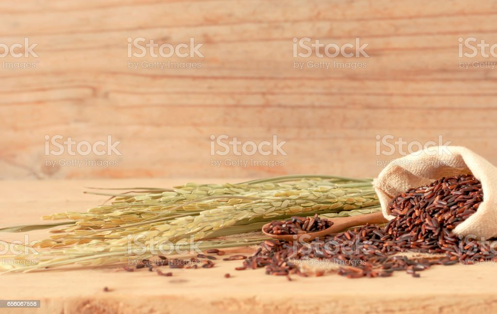 the brown raw rice in sack bag with dried rice plant on wooden table background. stock photo