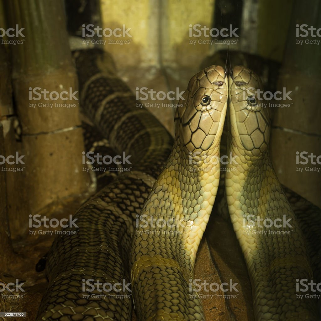 The brown snake stock photo