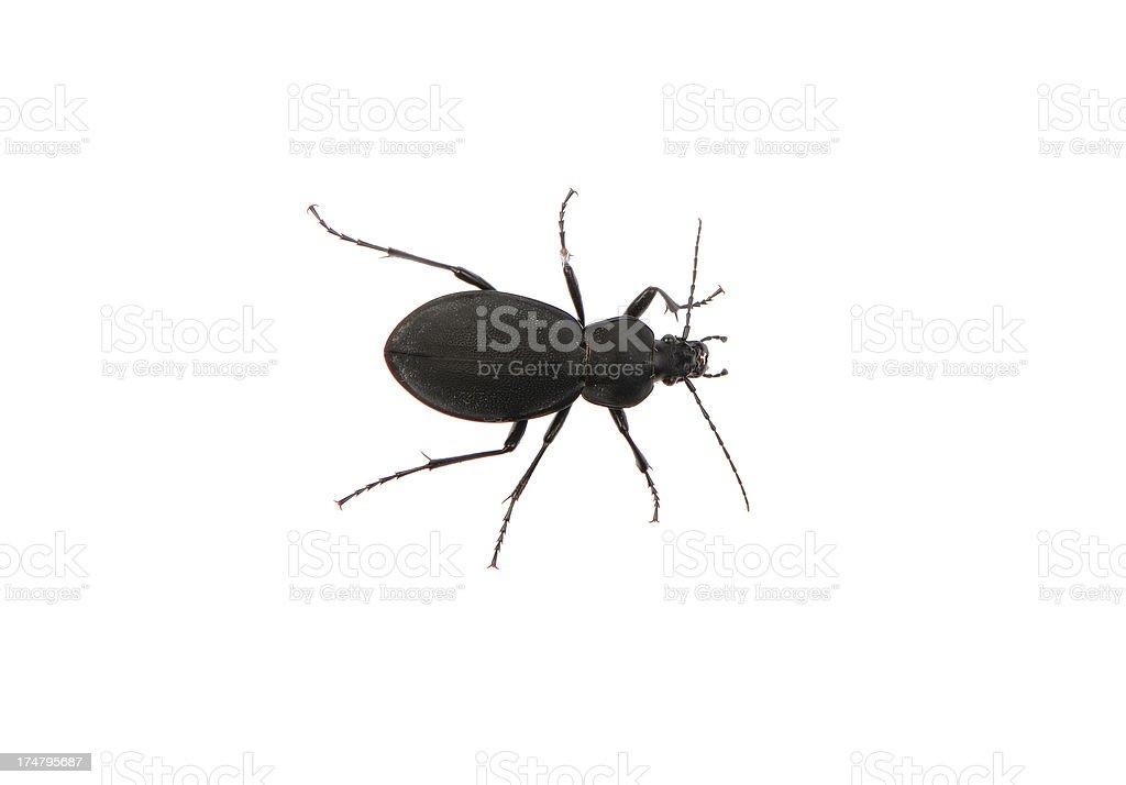 The Bug stock photo