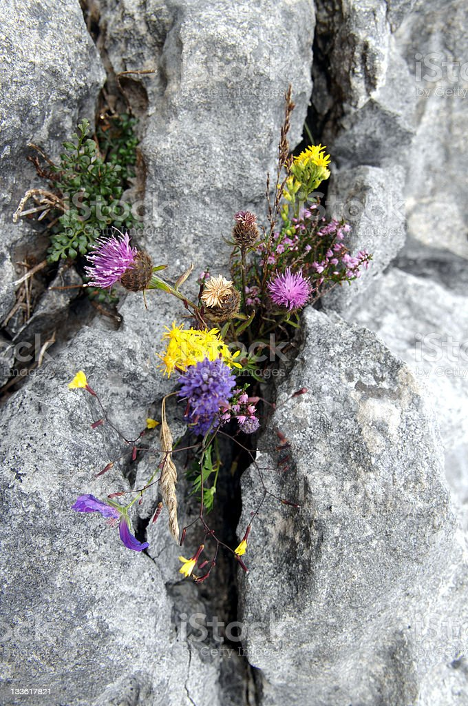 The Burren, County Galway, Ireland royalty-free stock photo