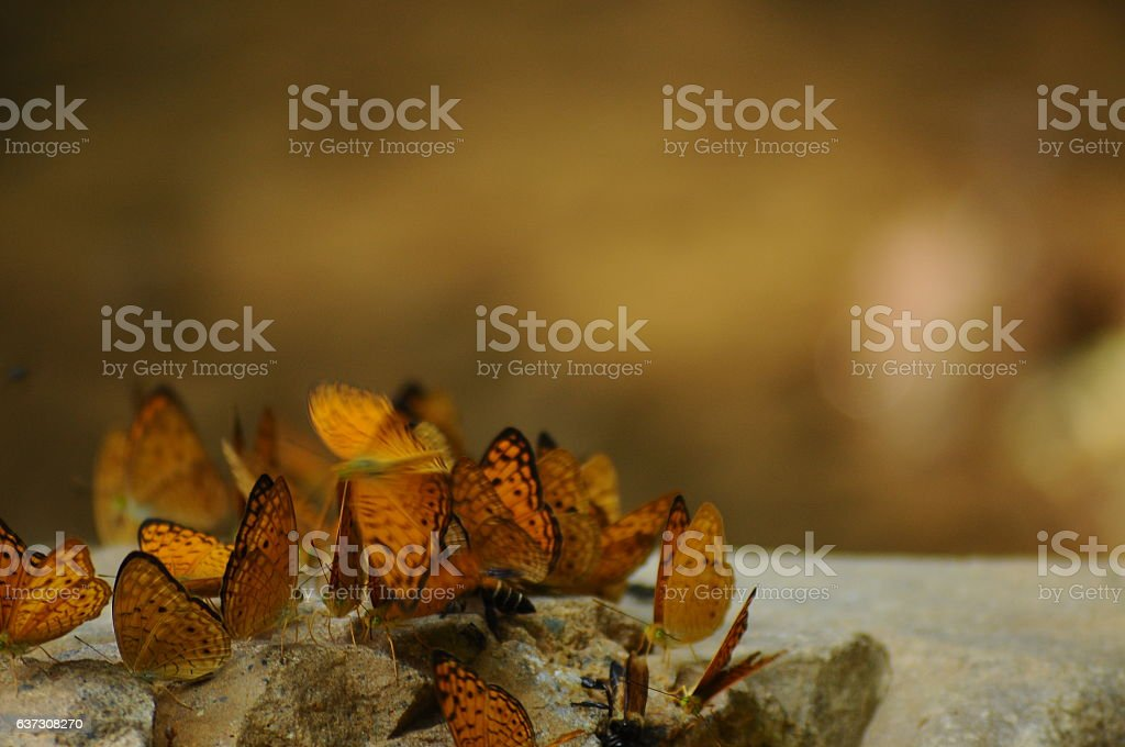 The Butterfly 34 stock photo