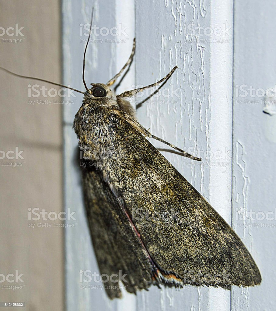 the butterfly in the house, the butterfly is waiting for its life to be filled, the butterfly is waiting to die stock photo