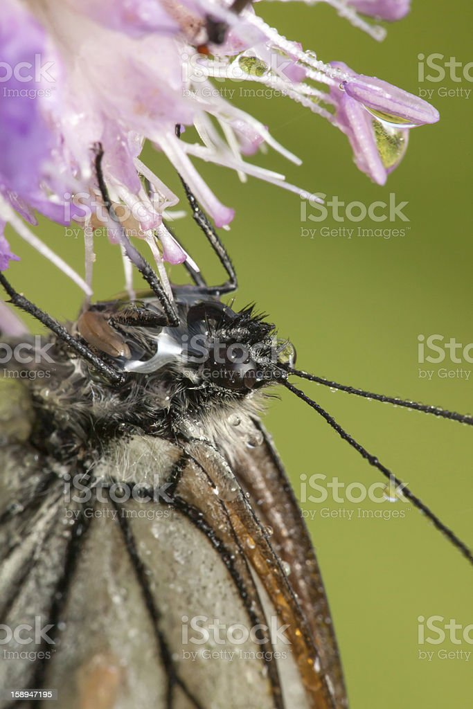 The butterfly on  flower close up royalty-free stock photo