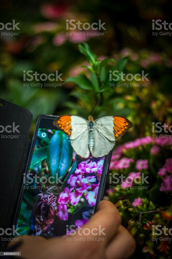 The butterfly on the phone stock photo