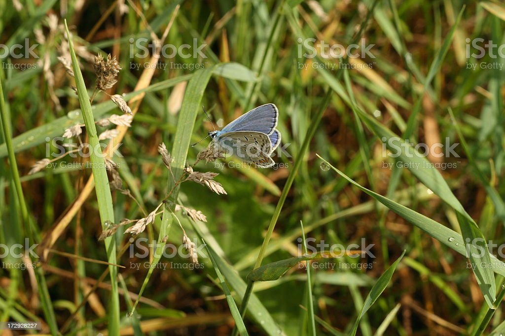 The butterfly royalty-free stock photo