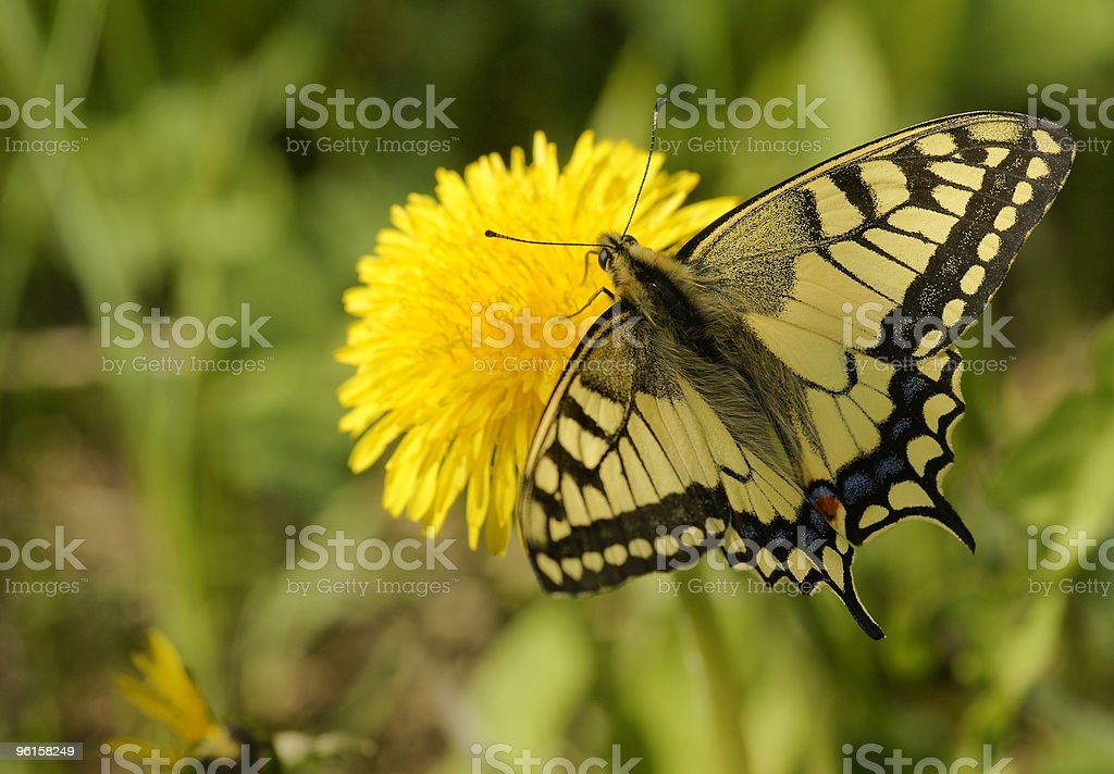 The butterfly. stock photo