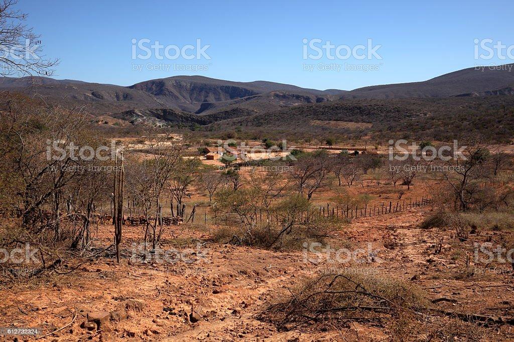 The caatinga landscape in Brazil stock photo