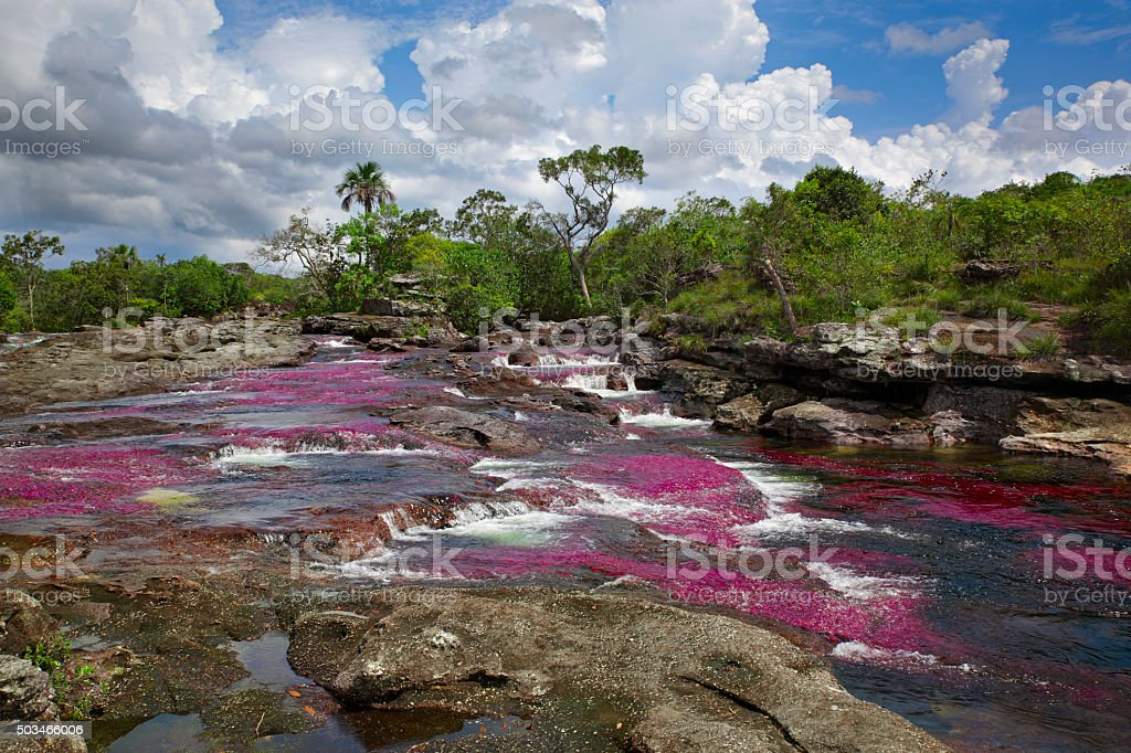 The Canio Cristales, one of the most beautiful rivers in the world stock photo