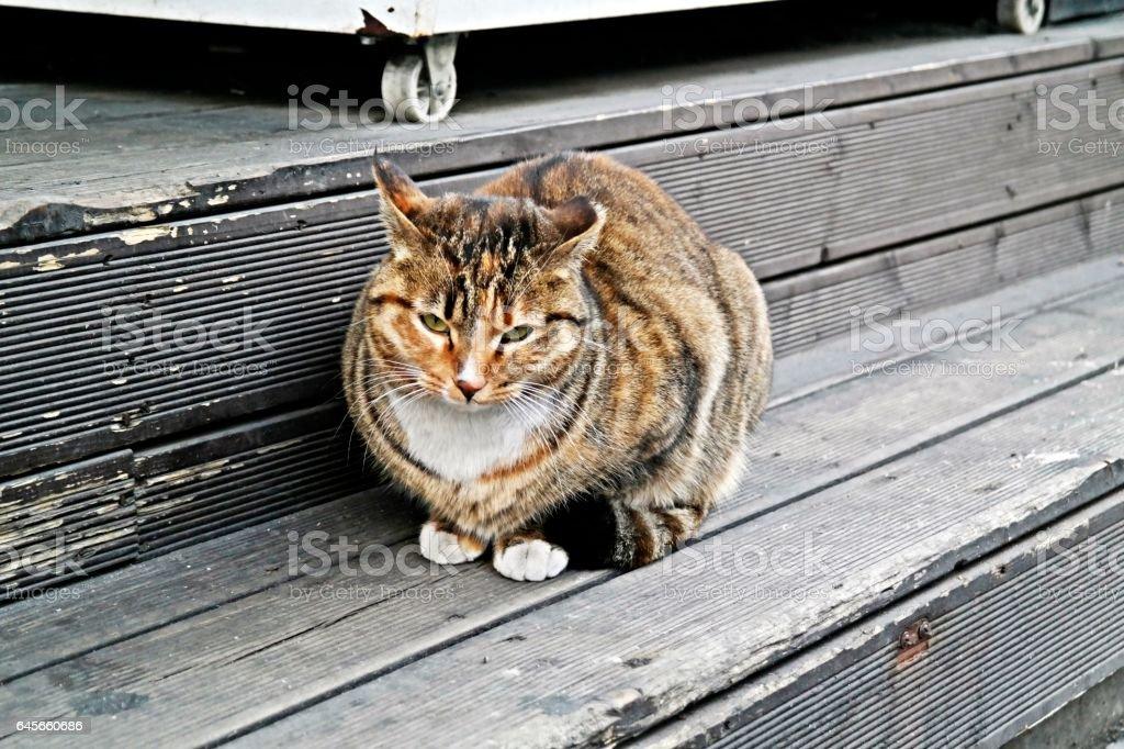 the cat image stock photo