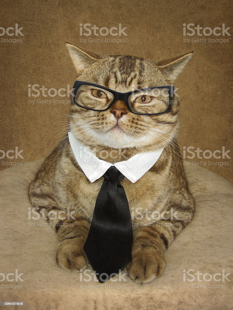 The cat in a glasses. stock photo