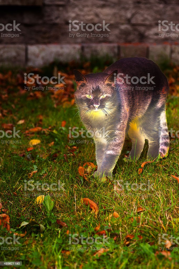The cat  in autumn Park stock photo