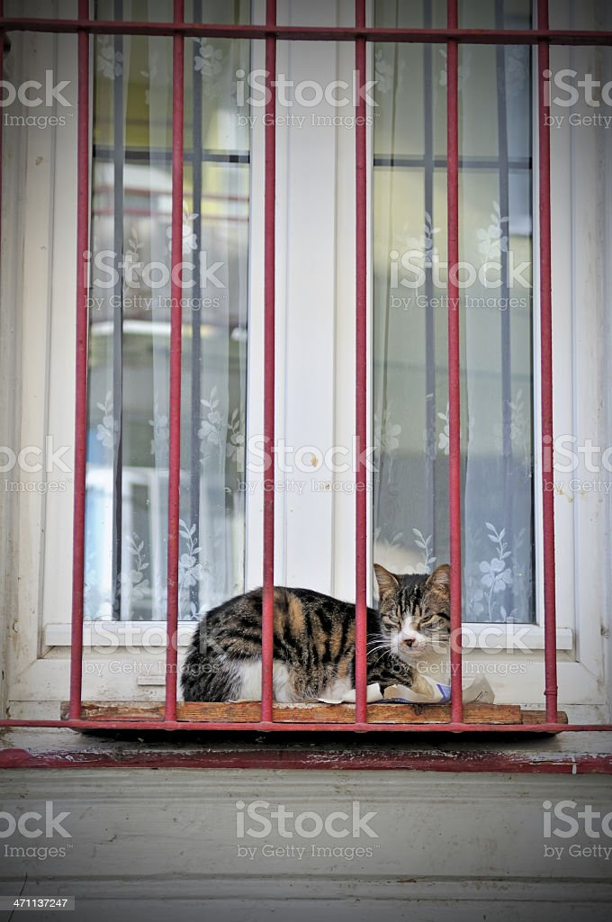 the cat in front of window royalty-free stock photo