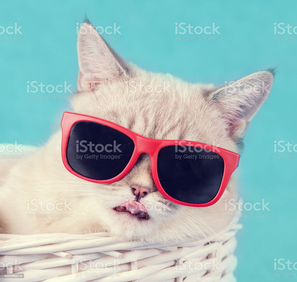 The cat in sunglasses lying in a basket stock photo