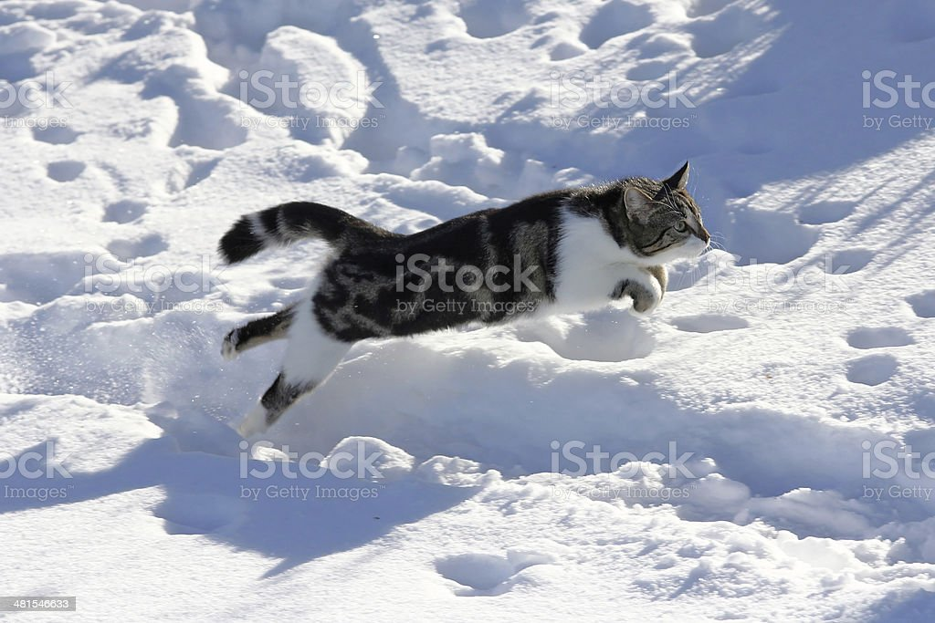 the cat in the winter stock photo