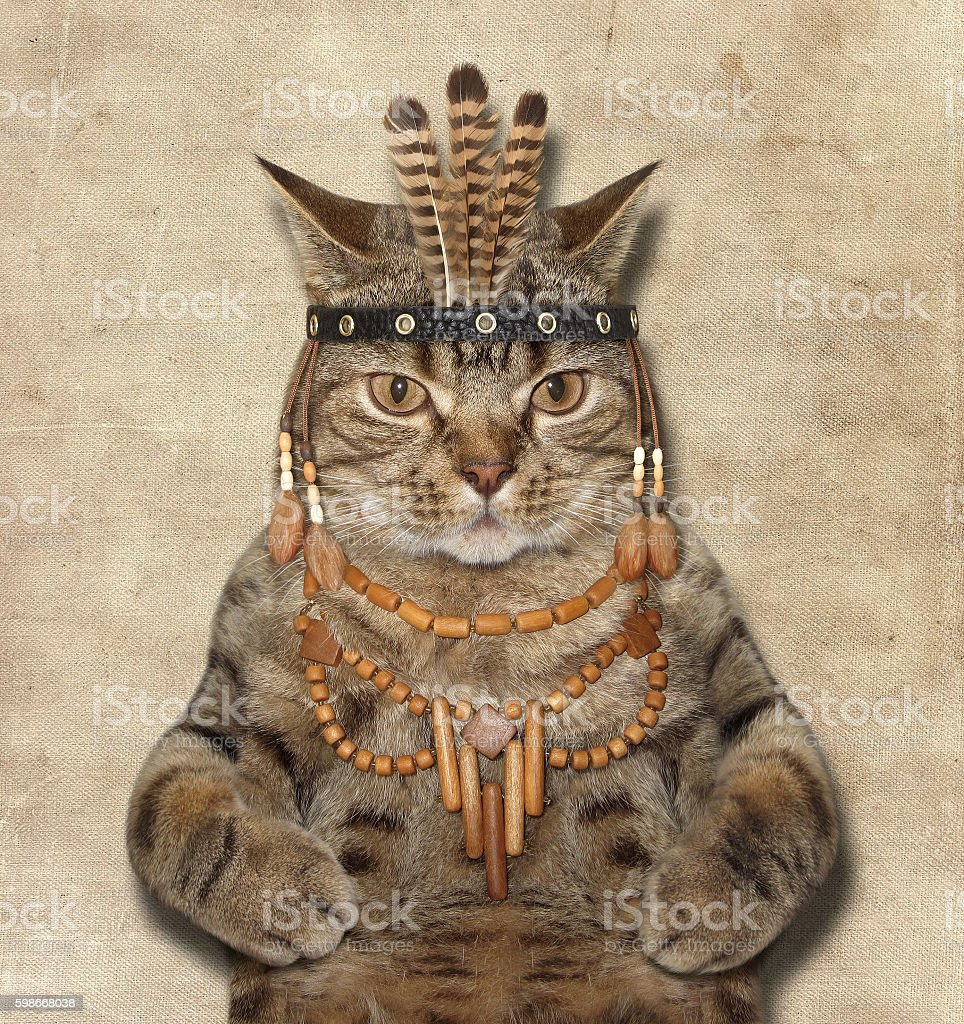 The cat is a american indian. stock photo