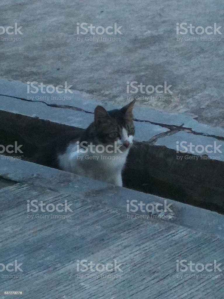 The cat is watching prey stock photo