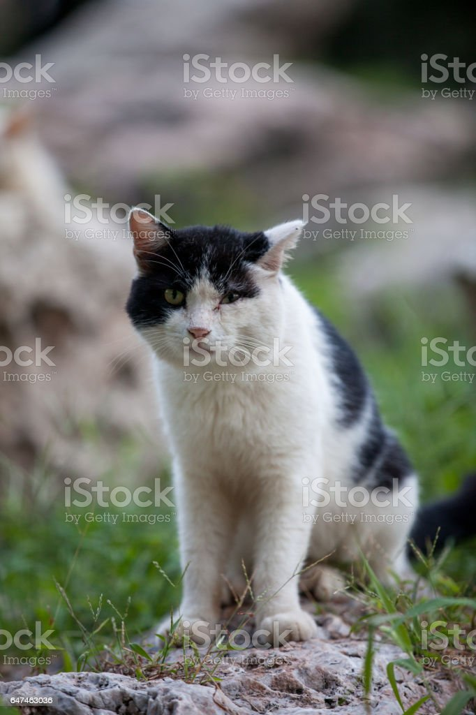 The Cat live traffic between the rocks stock photo