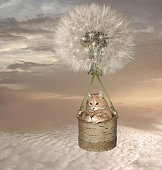 The cat on a dandelion.