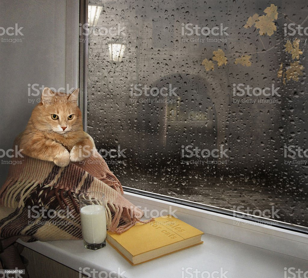 The cat on a windowsill. stock photo