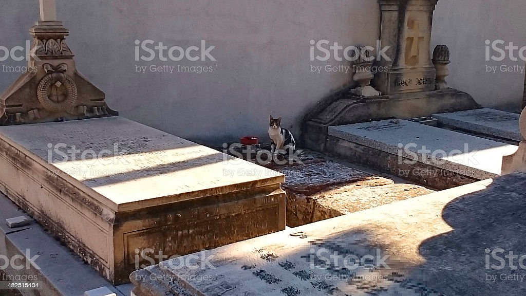 The cat  over carabanchel?s  cemetery graves stock photo