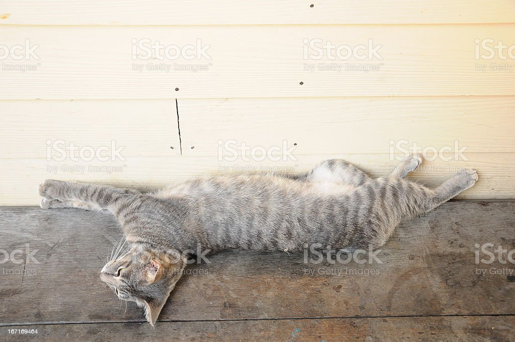 the cat royalty-free stock photo