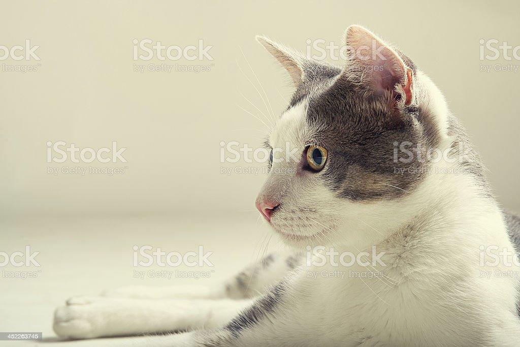 The Cat stock photo