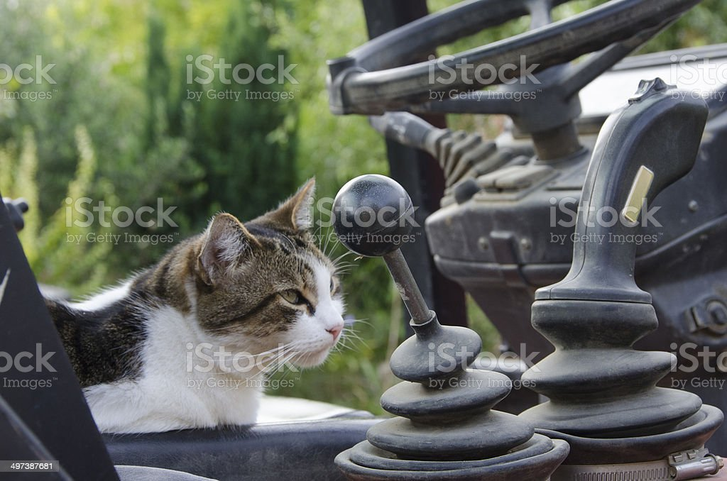 le chat stock photo