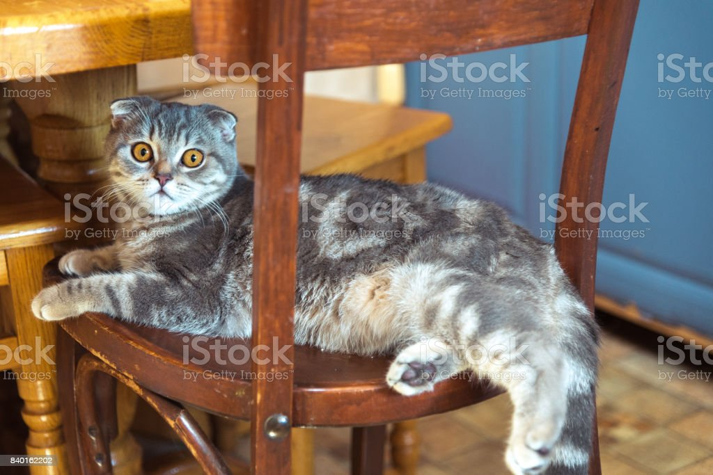 The cat sits on a wooden chair under the table stock photo