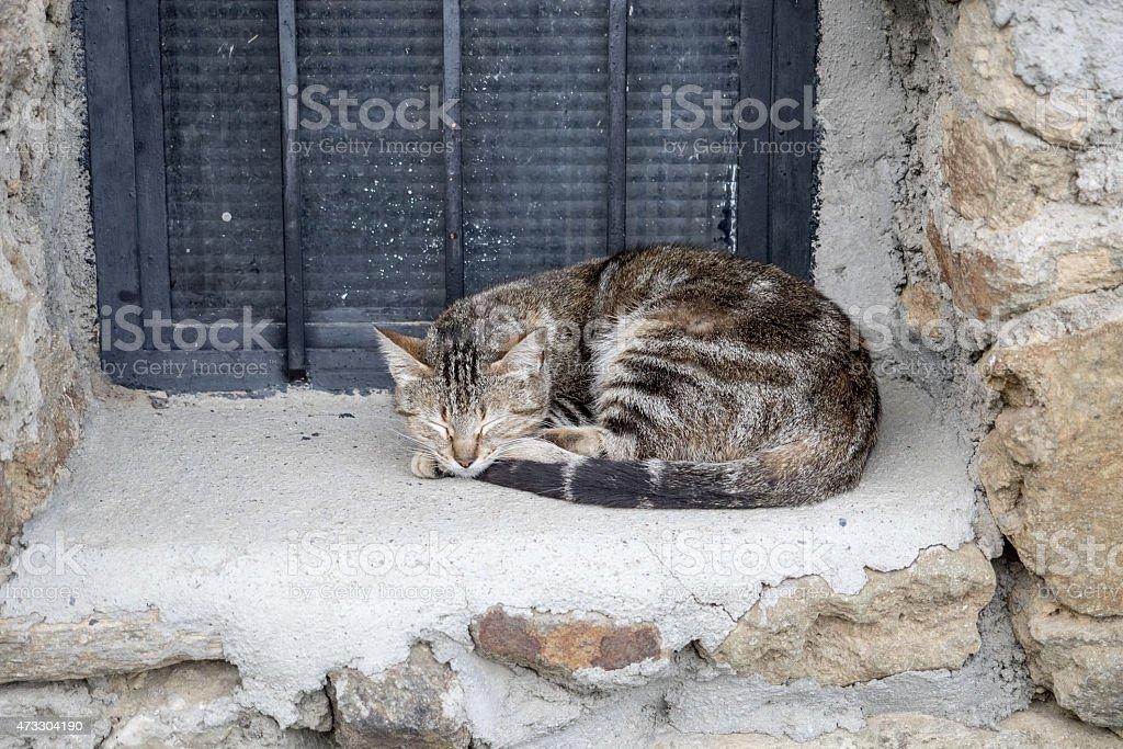 O Gato dorme na janela foto royalty-free