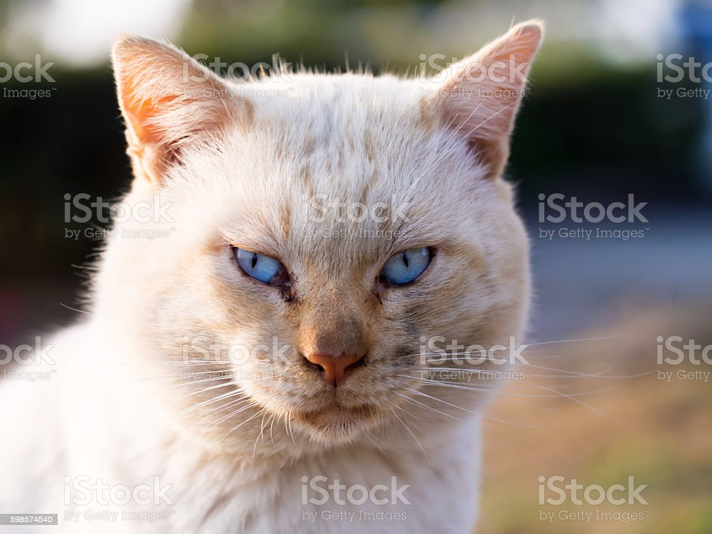 the cat stared at me stock photo