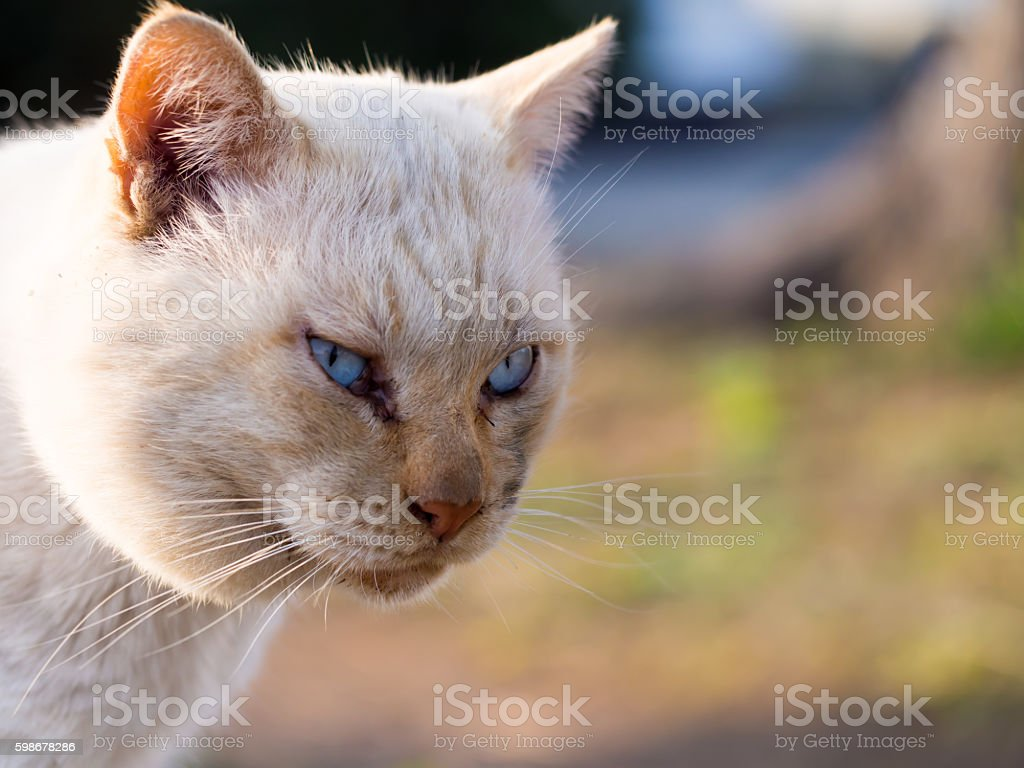 The cat strabismus me stock photo