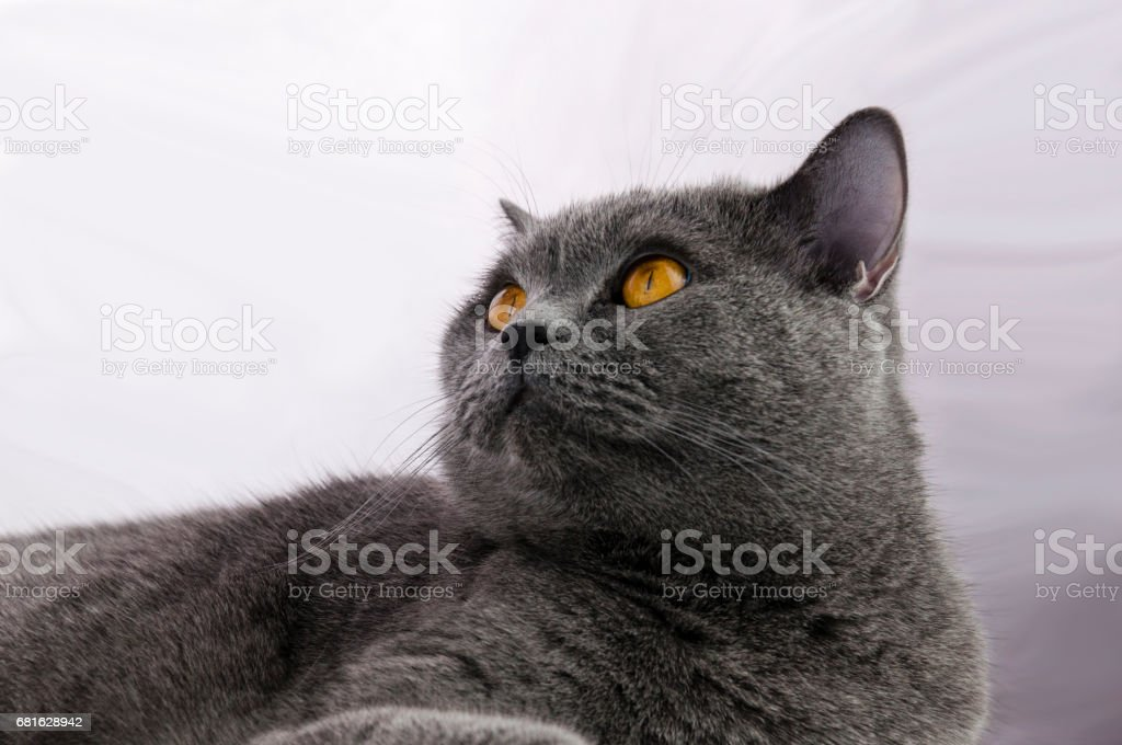 the cat thinks stock photo