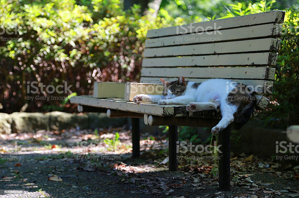 The cat which dozes off at a bench foto de stock libre de derechos
