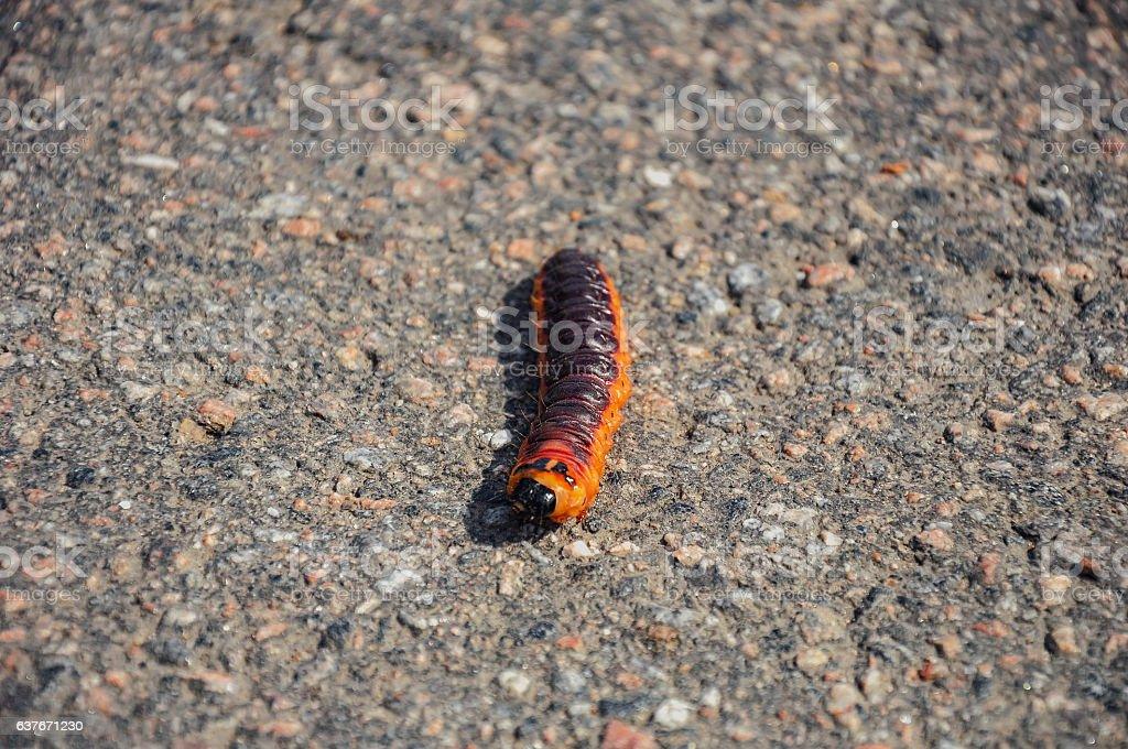 The caterpillar stock photo