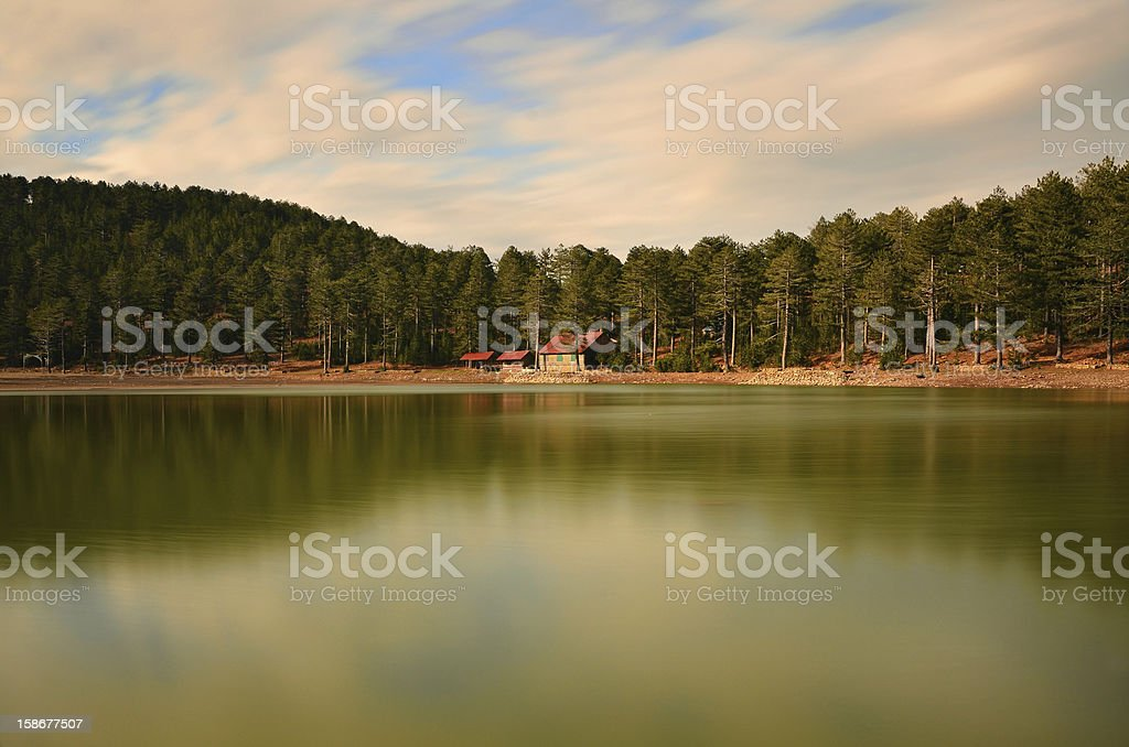 The center of natural life royalty-free stock photo