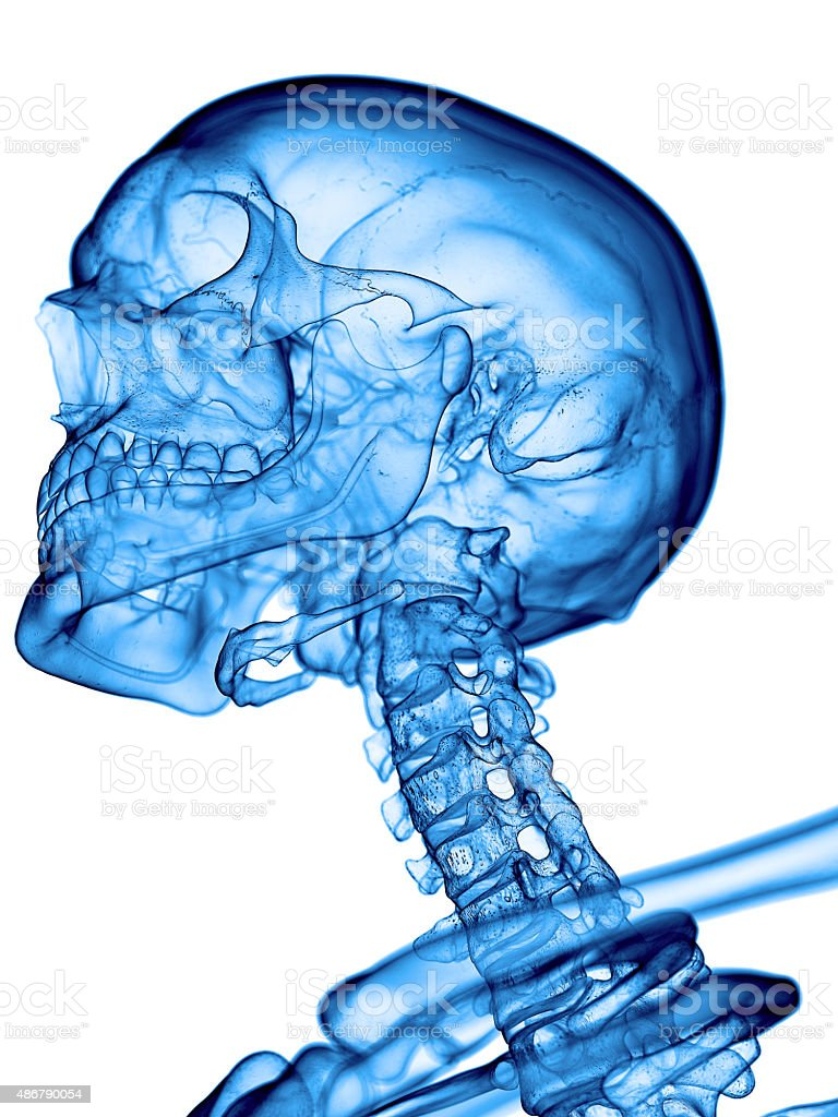 the cervical spine stock photo