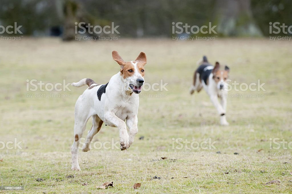 the chase stock photo