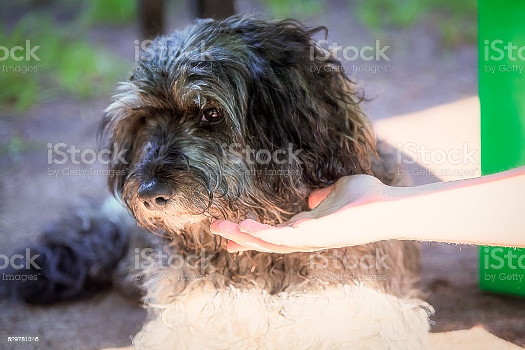 The child reaches for the dog stock photo