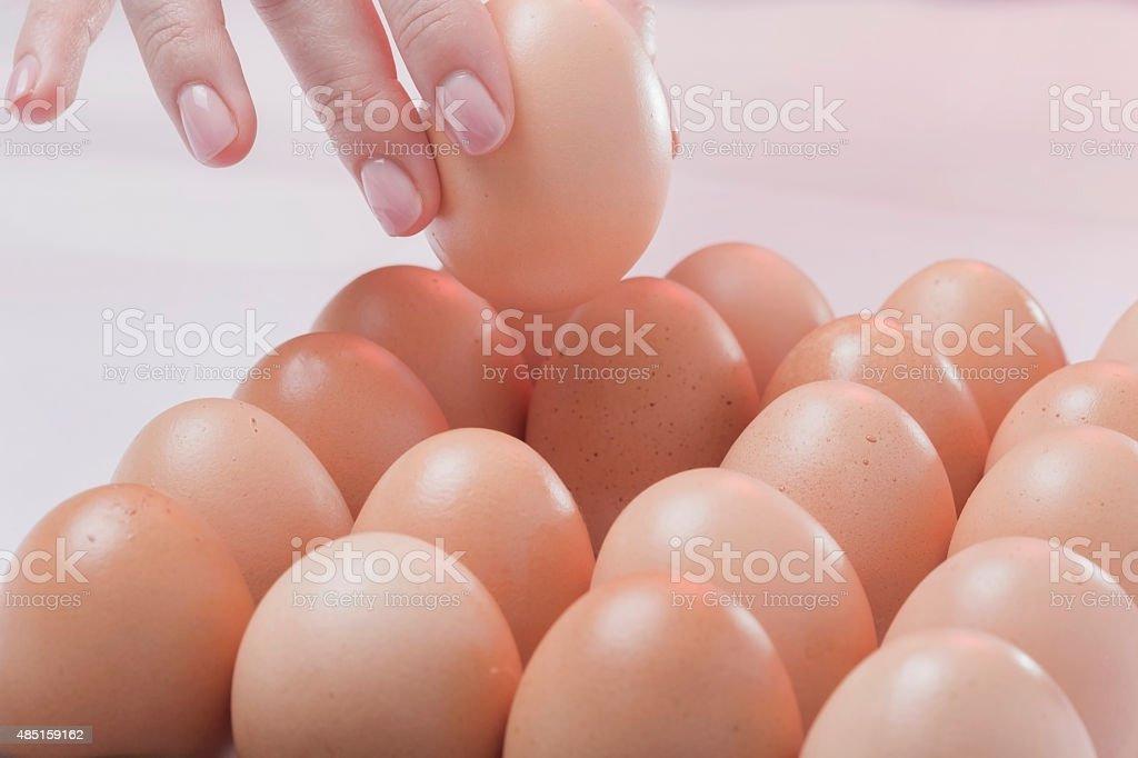 The chosen egg stock photo