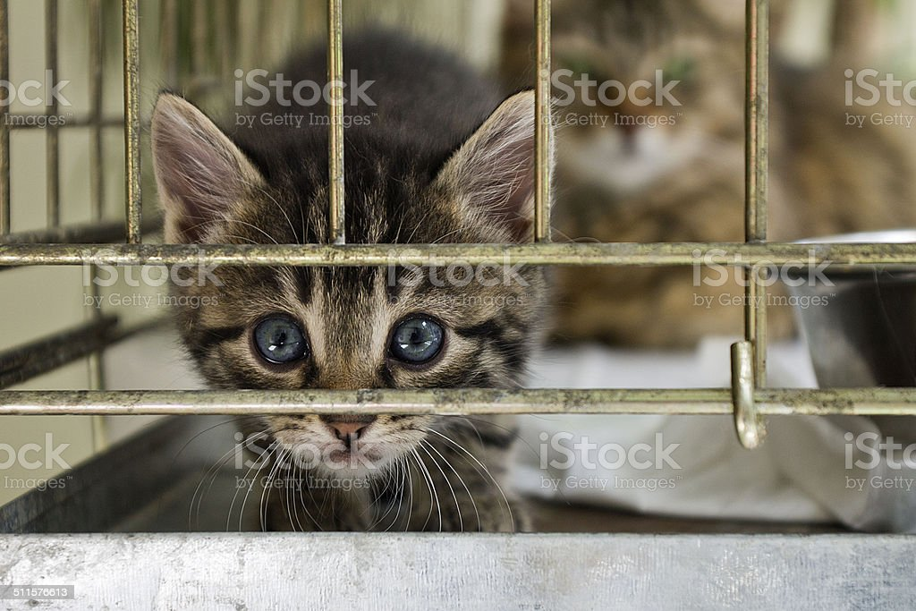 The citten looking from the cage stock photo