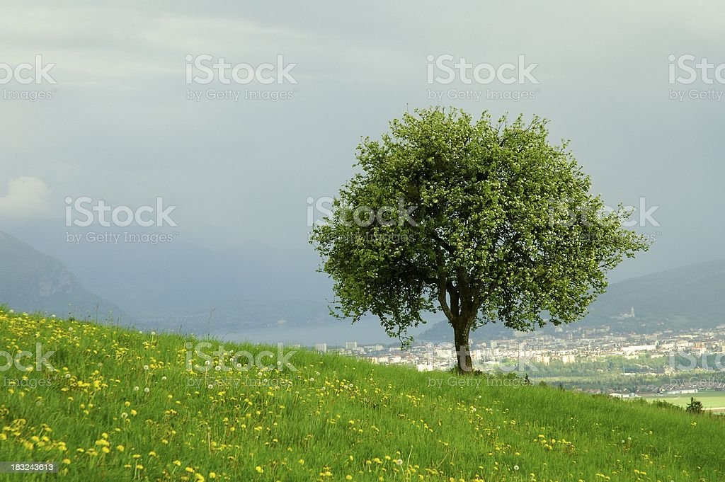 The city behind royalty-free stock photo