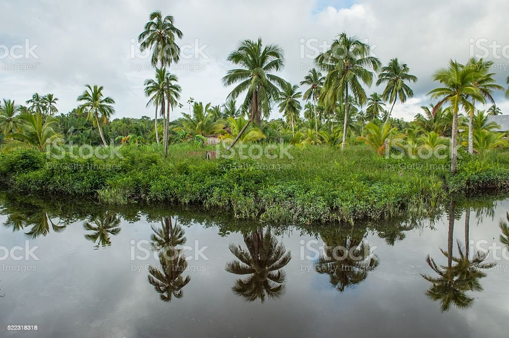 The coast of the wild river in the jungle stock photo