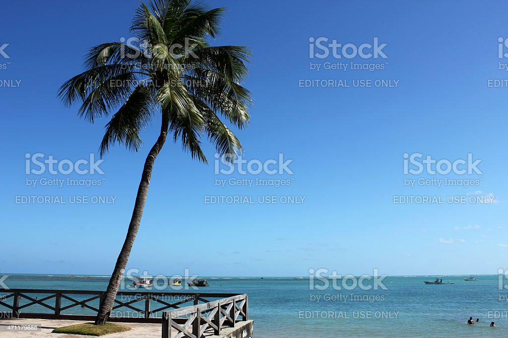 The coconut tree and the sea of Maceio stock photo