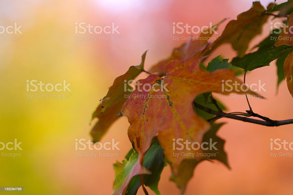 The color of change. royalty-free stock photo